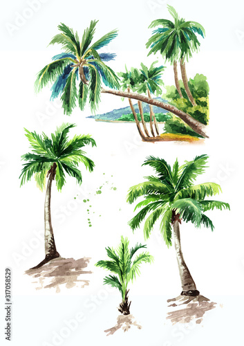 Obraz Tropical palm tree set, summer vacation concept. Hand drawn watercolor illustration isolated on white background - fototapety do salonu