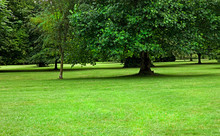 Green Meadow With Large Trees In Ireland