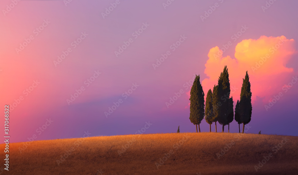 Fototapeta Beautiful nature countryside landscape; farm field and cypress trees over sunset sky