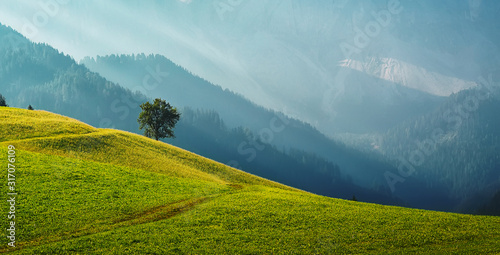 Wall mural - Mountains on highland. Beautiful mountain landscape with fog in the valley under sunshine. The hills covered with grass and forest . Perfect countryside scenery with tree, under sunlight