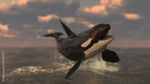 Fotomural Killer whale is in the air jumped so high above almost flying 3d rendering