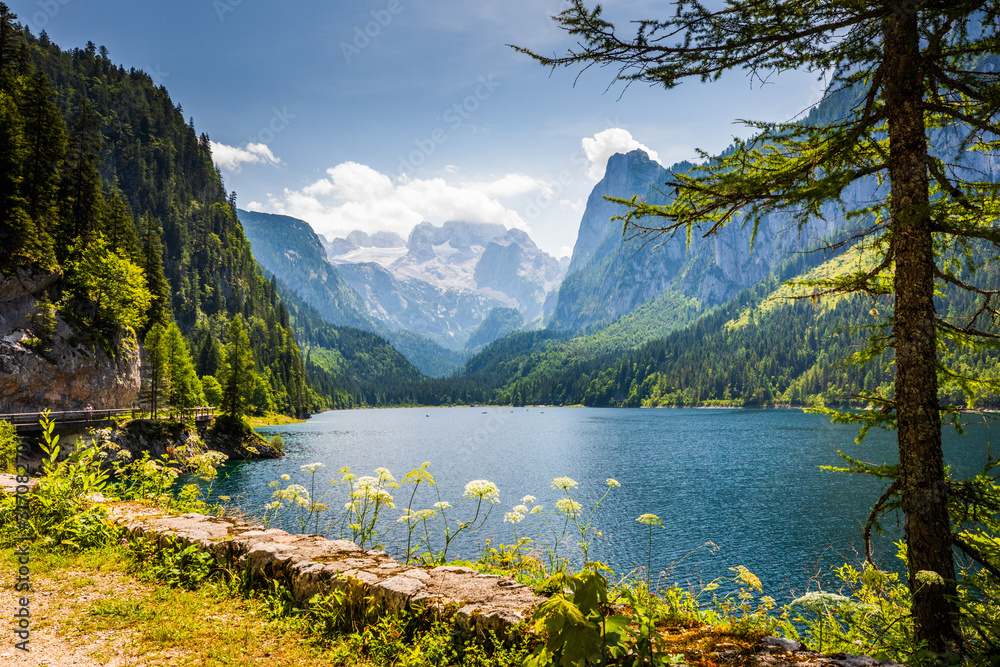 Fototapeta Gosausee lake and tree with Dachstein behind