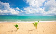 Beautiful Sandy Beach And Trop...