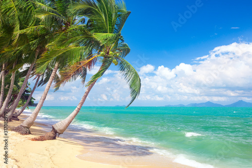 beach and coconut palm trees