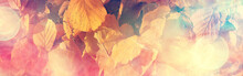 Long Narrow Background Autumn ...