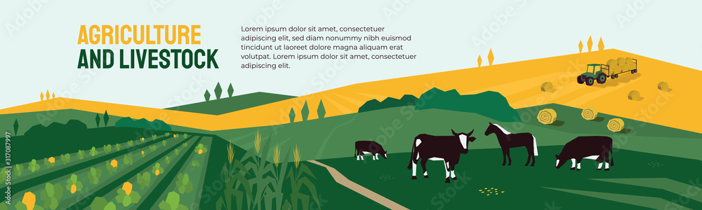Fototapeta Background for agriculture or livestock company. Vector illustration of farm land, cows and horse in pasture, tractor on hayfield. Corn field, farming in countryside. Template for banner, print, flyer