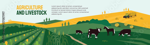 Fototapeta Background for agriculture or livestock company. Vector illustration of farm land, cows and horse in pasture, tractor on hayfield. Corn field, farming in countryside. Template for banner, print, flyer obraz