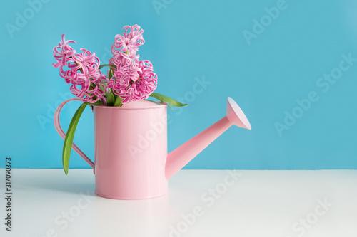 Obraz na plátně Decorative watering can with pink hyacinths. Gardening.