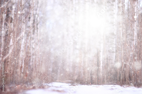 landscape snowfall in the forest, forest covered with snow, panoramic view trees in the snow weather