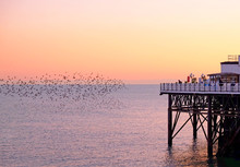 The End Of Brighton Pier Jutti...