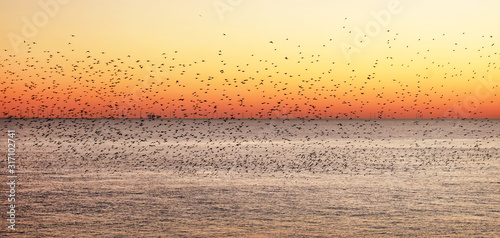 Photo starlings murmurating at sunset over the sea