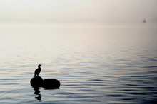 Calm And Relaxing Image Of Bir...
