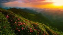 Scenic Summer Sunrise Nature I...