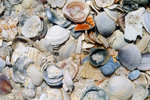 Pile Of Sea Shells In The Sand...