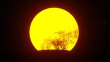 Silhouette Of Growing Tree In ...