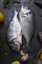 Fresh Raw Dorado Fish With Herbs And Lemons On Dark Background