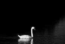 Grey Scale Shot Of A Beautiful...