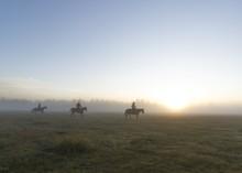 Group Of Horsemen In A Grassy ...