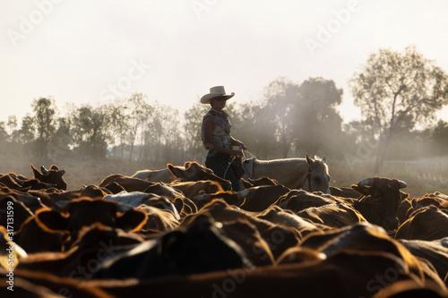 Fototapeta Female drover herding cattle.