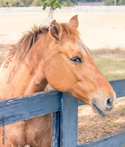 A friendly horse greeting at the fenceline.