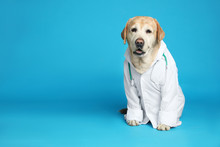 Cute Labrador Dog In Uniform With Stethoscope As Veterinarian On Light Blue Background. Space For Text