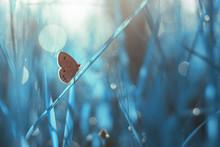 Beautiful Butterfly In The Bush
