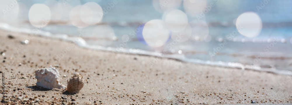 Fototapeta Shell on tropical summer sand beach background.