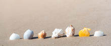 Shell On Tropical Summer Sand ...