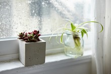 Green Houseplant In A Glass Jar And A Mexican Rose Plant In A Concrete Flowerpot On A Window Sill