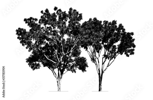 Obraz trees silhouette. high contrast style : vector  - fototapety do salonu