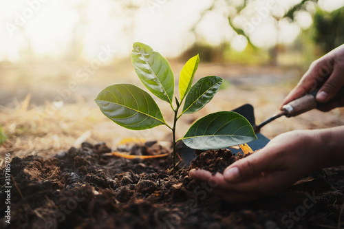 Obraz planting tree in garden. concept save world green earth - fototapety do salonu
