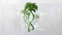 DNA Growing As A Plant - 3d Rendering