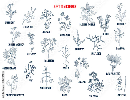 Best tonic herbs collection. Hand drawn vector set Wallpaper Mural