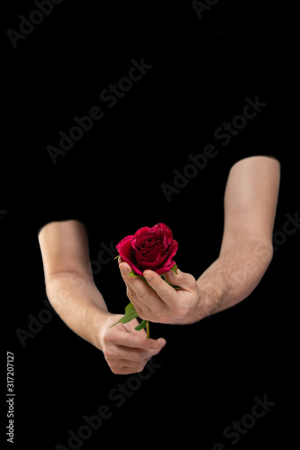 Photo secret admirer, unknown man in love gives rose, holds flower in his hands