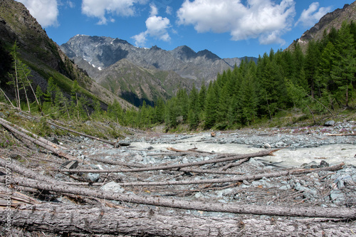 Mountainos landscape. View at forest broken by the avalanche. Canvas Print