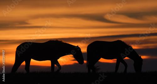 Fototapeta Two horses grazing at sunset obraz