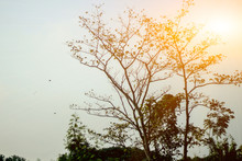 Beauty Of The Morning Sun Pass...