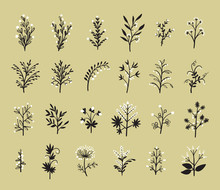 Floral Vector Set Of Design Pl...