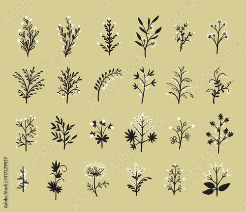 Fotografía Floral Vector Set of Design Plant Elements