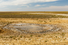Small Puddle In The Steppe On ...