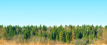 Panoramic Top View Of Conifero...