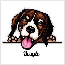 Color Dog Head, Beagle Breed On White Background
