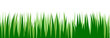 Grass. Vector. Juicy spring grass to frame the bottom. The horizontal location. Background picture. Isolated object.