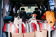 Two Cute Dogs In A Van, Border...