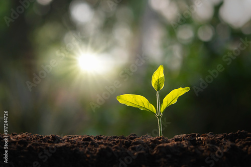 Photo small tree growing in garden with morning light