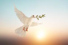 White Dove Or White Pigeon Car...