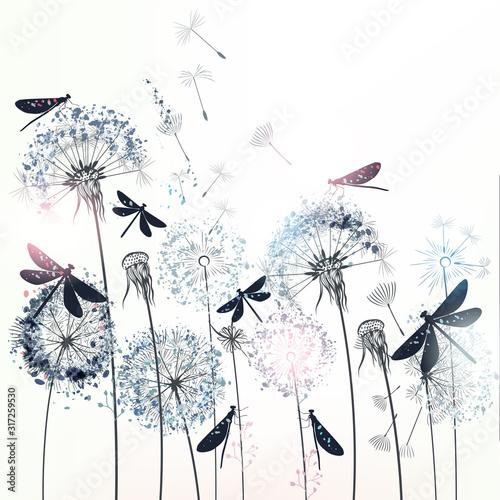 Fototapeta dmuchawce   elegant-vector-illustration-with-dandelions-and-dragonflies