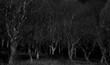 Leinwandbild Motiv 暗い森