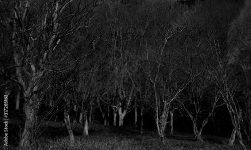 Fotomural 暗い森