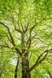 Leinwanddruck Bild - tree with leaves